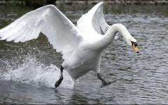 Clarinet Duet–Mad Swans